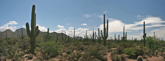 PANORAMIQUE  SAGUARO PARK_USA