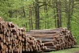 Fototapety Holz
