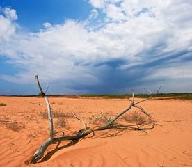 dry branch is in the desert