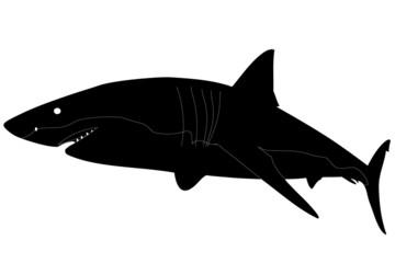 squalo 02