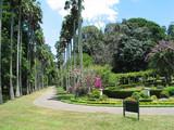 Sri Lanka Giardini poster