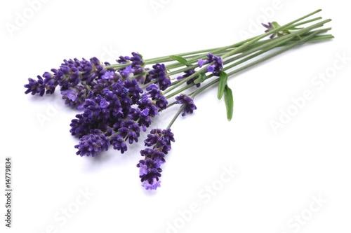 Papiers peints Lavande Lavendel