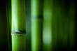 Fototapeten,bambus,zen,asien,asiatisch