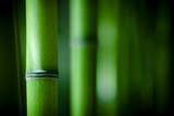 Fototapety Bambou zen