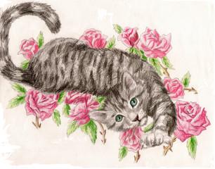 Tabby Rose Cat