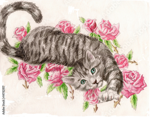 Tabby Rose Cat