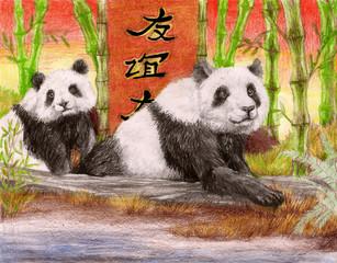 Pandaship