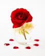 Aus Liebe