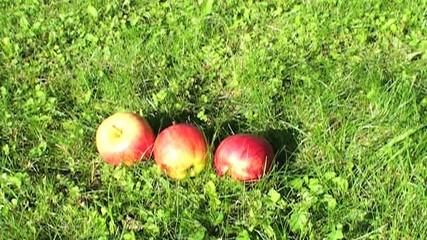 äpfel fallen vom baum auf die wiese