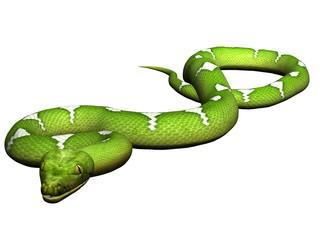 Crawling green python