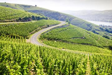 grand cru vineyard, Côte Rotie, Rhône-Alpes, France