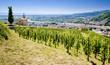 Leinwanddruck Bild - grand cru vineyard, L´Hermitage, Rhône-Alpes, France