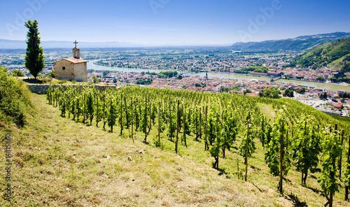 grand cru vineyard, L´Hermitage, Rhône-Alpes, France - 14815860
