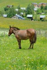 cheval solitaire dans un pré
