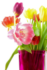 Tulips,sharp and blur isolated on white background