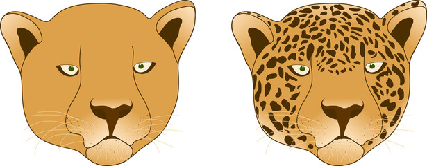Leopard and lioness