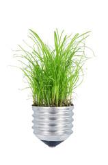 luce di erba