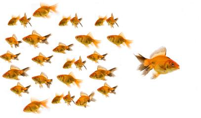 gold fish concept
