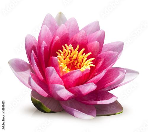 Fotobehang Lotusbloem fleur de lotus sur fond blanc