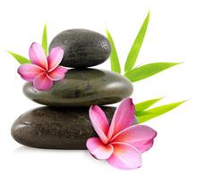 fiori di frangipani e ciottoli zen
