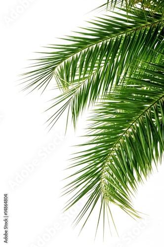 Poster Palm boom Palme