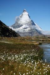 Matterhorn Flowers