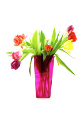 Tulips in a pink vase isolated on white background