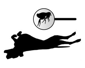 Hund scheuert wegen Flöhen