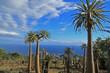 jardin tropical exotique de pachypodiums, palmiers de mada.
