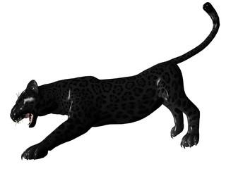 Agressive black panther