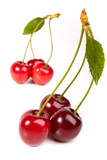 sweet red cherry with leaves isolated on white