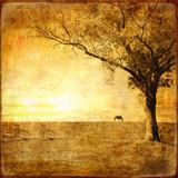Fototapety golden sunset