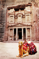 camel in front of treasury petra jordan