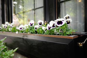 Elegant Window Box with Pansies