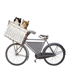 cats and bike