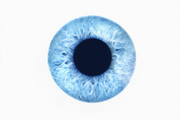 Blue eye on white background