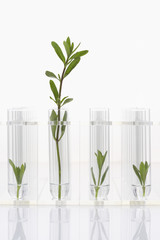 Seedlings growing in test tubes, one larger plant contrasted with three smaller ones