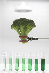 Broccoli over test tubes containing green chemicals