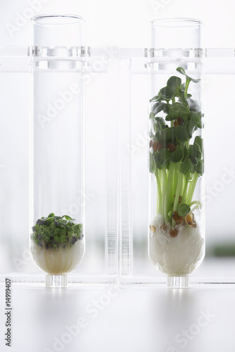 Seedlings growing in test tubes