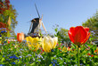 Leinwanddruck Bild - typical dutch: mill and tulips in keukenhof holland
