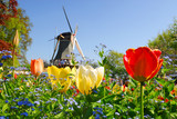 Fototapety typical dutch: mill and tulips in keukenhof holland