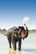 bathing elephant in river in nepal