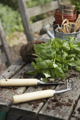Plant,  Gardening Tools and Potting Soil
