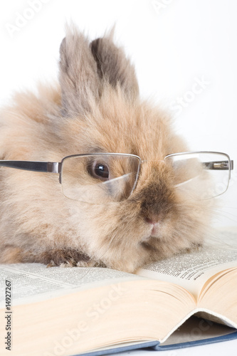 brown bunny with glasses, isolated on white