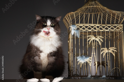 Cat sitting next to empty birdcage, licking chops