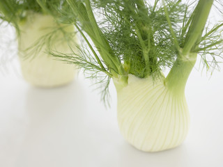Stalk of Fennel