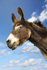 Donkey's head against blue sky, side view