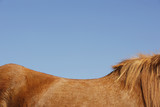 Horse against blue sky, side view, top mid section
