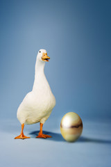Goose standing beside golden egg, studio shot