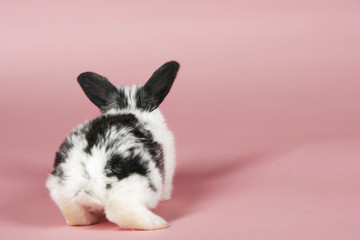 Pet rabbit on pink background, back view